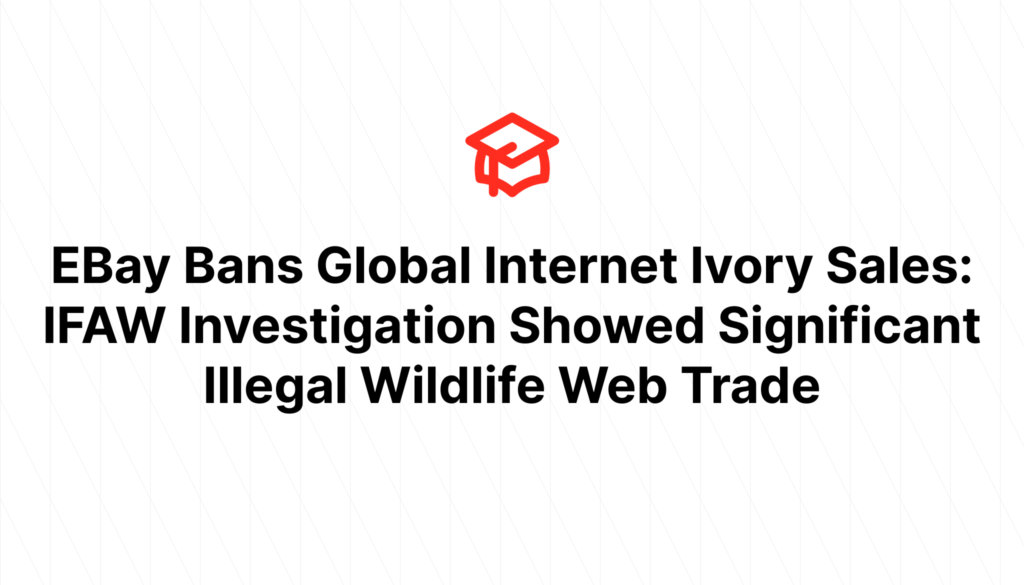 EBay Bans Global Internet Ivory Sales: IFAW Investigation Showed Significant Illegal Wildlife Web Trade